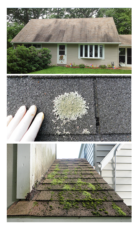 Algae Lichen Moss Can Eat Roof Concrete Or Siding